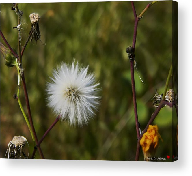 Still Life Acrylic Print featuring the photograph Another Season Passes by Rhonda McDougall
