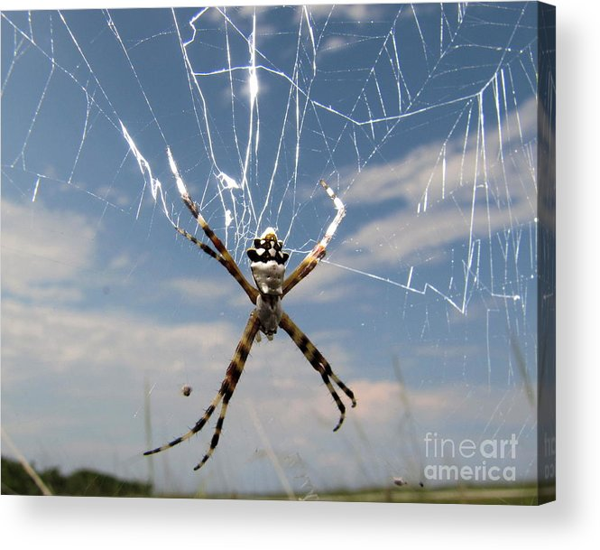 Banan Spider Acrylic Print featuring the photograph Banna Spider by David Call