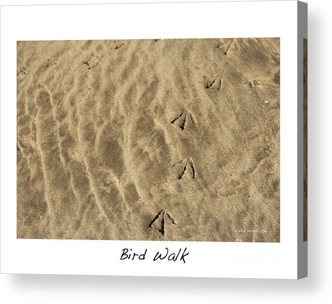 Bird Feet Acrylic Print featuring the photograph Bird Walk by Artist and Photographer Laura Wrede