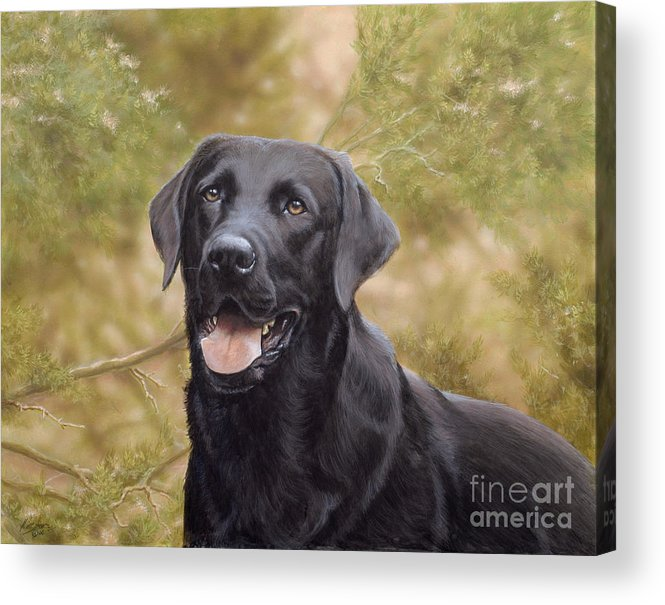 Black Labrador Acrylic Print featuring the painting Black Watch by John Silver