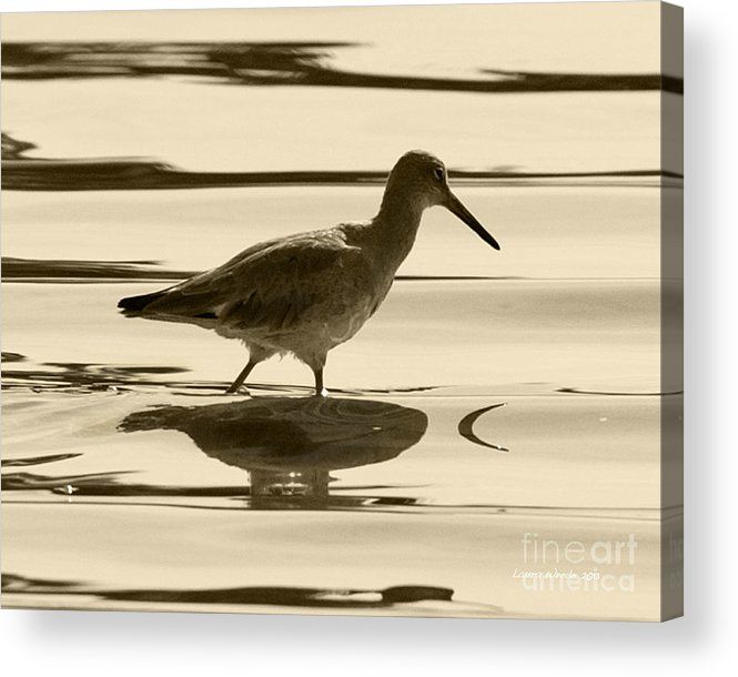 Gaviota Acrylic Print featuring the photograph Early Morning In The Moss Landing Harbor Picture Of A Willet by Artist and Photographer Laura Wrede