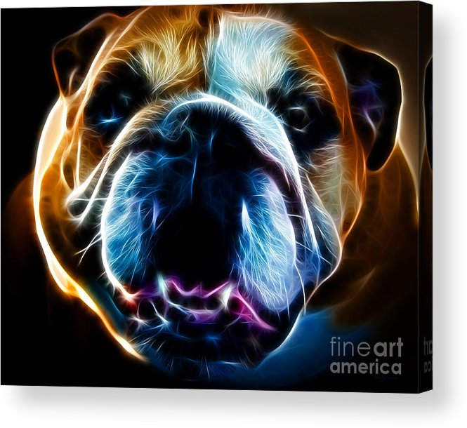 Animal Acrylic Print featuring the photograph English Bulldog - Electric by Wingsdomain Art and Photography