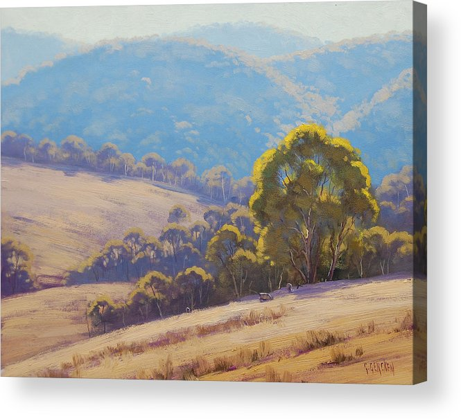 Rural Acrylic Print featuring the painting Highland Grazing Lithgow by Graham Gercken