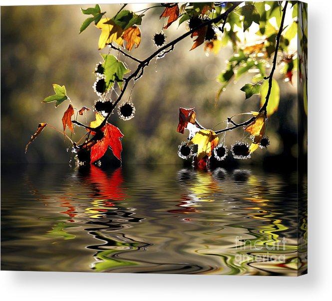 Liquidambar Maple Autumn Fall Flood Water Reflection Acrylic Print featuring the photograph Liquidambar In Flood by Sheila Smart Fine Art Photography