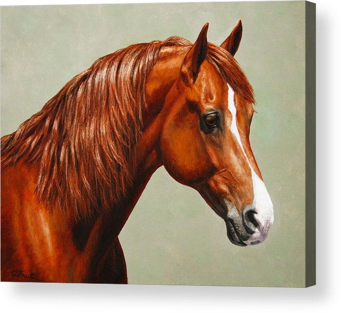 Horse Acrylic Print featuring the painting Morgan Horse - Flame by Crista Forest