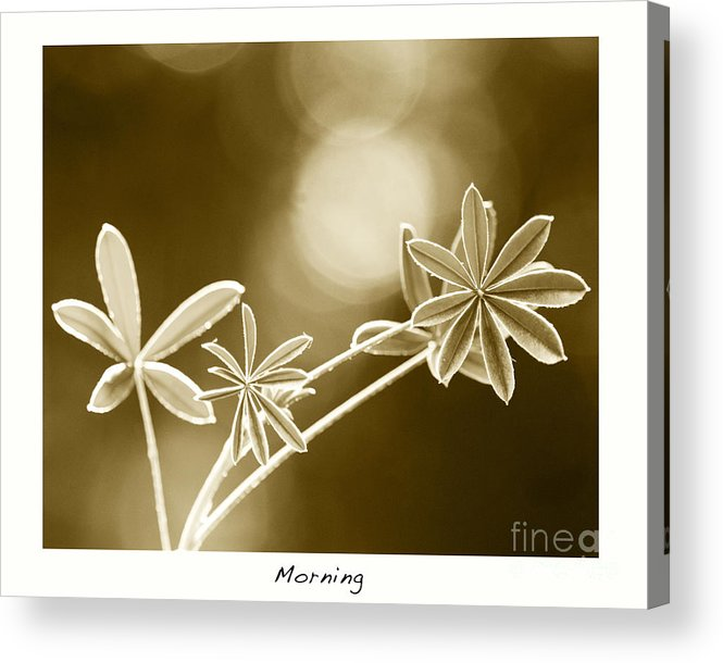 Vintage Art Acrylic Print featuring the photograph Morning by Artist and Photographer Laura Wrede
