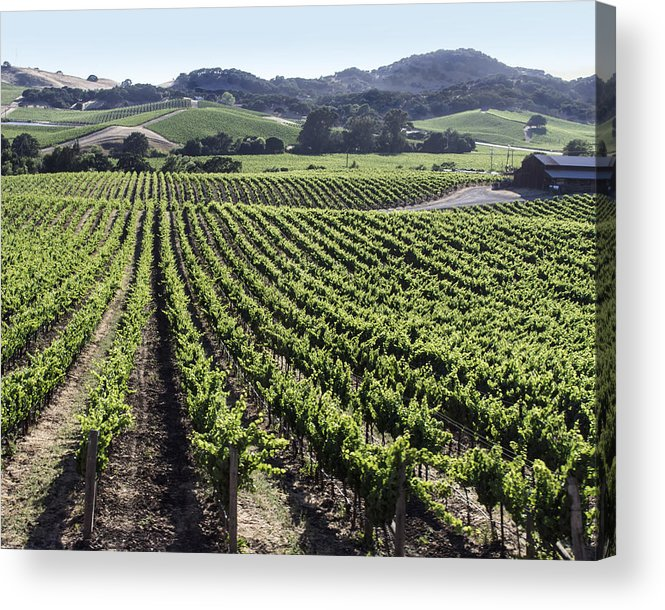 Napa Acrylic Print featuring the photograph Napa Valley Vineyard by Dee Savage