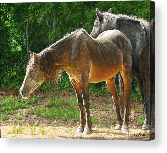 Old Acrylic Print featuring the painting Out To Pasture by Cara Bevan