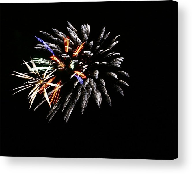 Tree Acrylic Print featuring the photograph Red White And Blue by Alexandra Rampolla