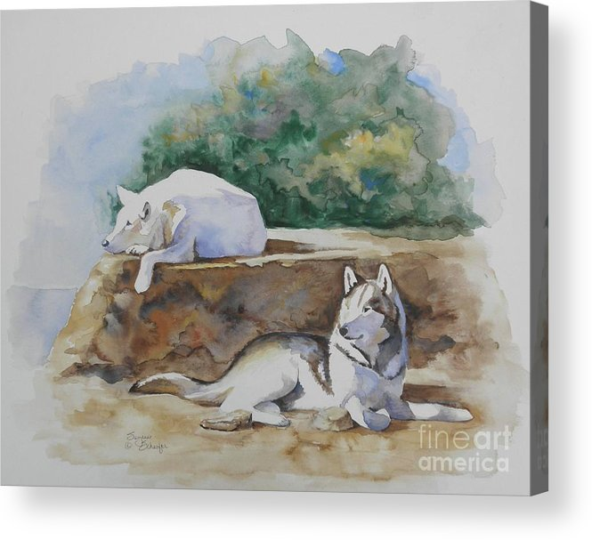 Wolves Acrylic Print featuring the painting Siesta Time by Suzanne Schaefer