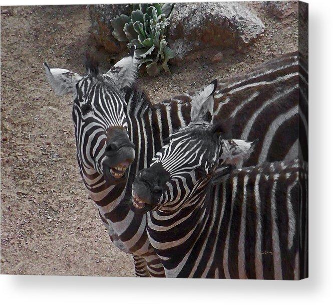 Zebras Acrylic Print featuring the digital art Smiling Zebras by Ernie Echols