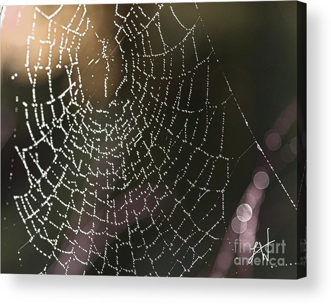 Spider Web Acrylic Print featuring the photograph Spiderweb Green by Artist and Photographer Laura Wrede