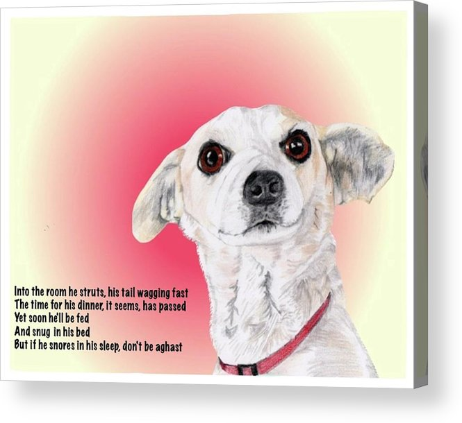 Dog Acrylic Print featuring the drawing Stitch - A Shelter Sweetie by Dave Anderson