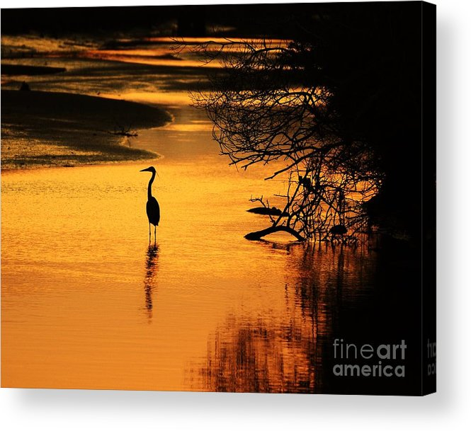 Heron Silhouette Acrylic Print featuring the photograph Sublime Silhouette by Al Powell Photography USA