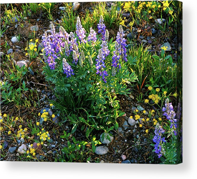 Wyoming Acrylic Print featuring the photograph Teton Widflowers by Ed Riche