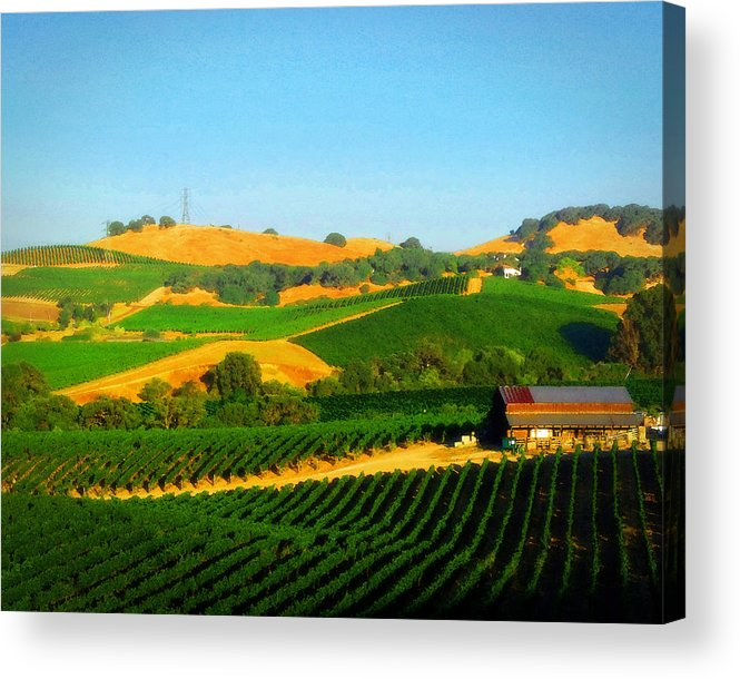 Vineyards Acrylic Print featuring the photograph The Los Carneros District by Timothy Bulone