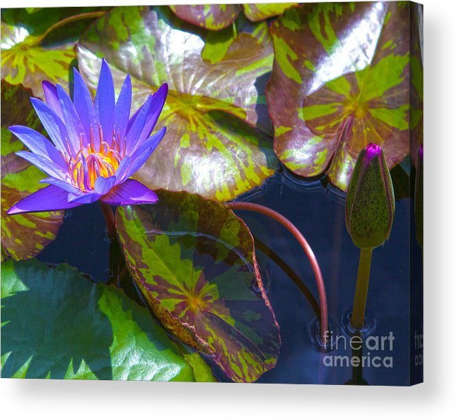 Flowers Acrylic Print featuring the photograph Water Lily Pond by Roselynne Broussard