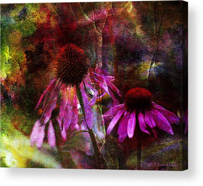 J Larry Walker Acrylic Print featuring the photograph Cone Flower Beauties by J Larry Walker