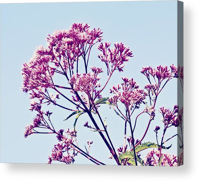 Flower Acrylic Print featuring the photograph Elegant Pink Flowers. by Kimberly Teebagy