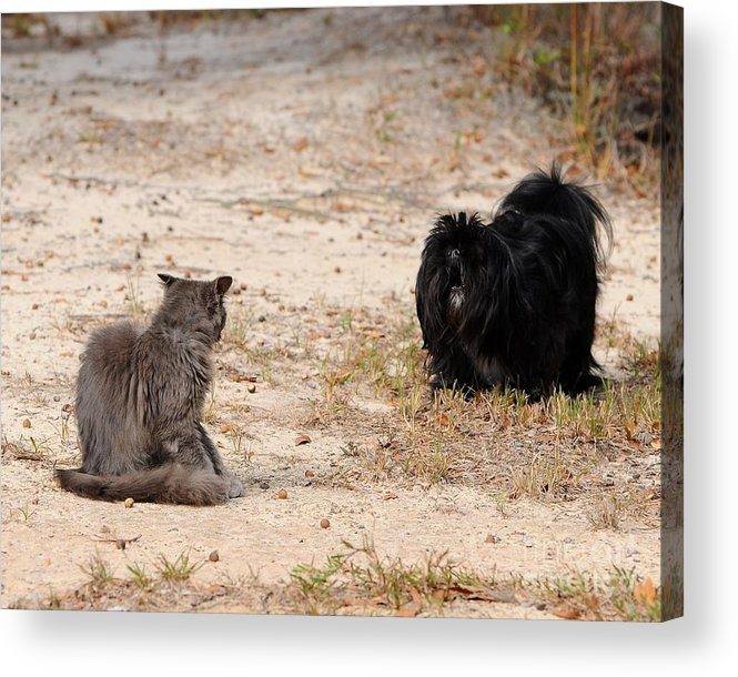 Pet Acrylic Print featuring the photograph First Impressions by Al Powell Photography USA
