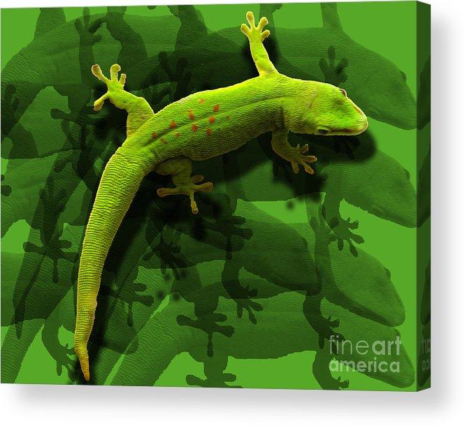 Lizard Acrylic Print featuring the photograph Gecko-gecko-gecko by Anne Ferguson