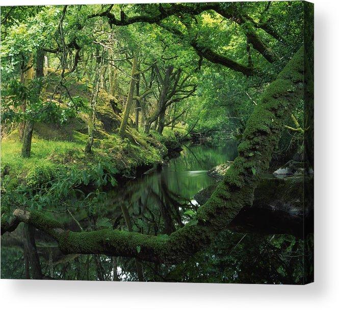 County Cork Acrylic Print featuring the photograph Glengarriff River, County Cork, Ireland by Richard Cummins