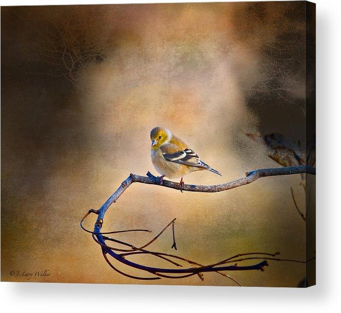 J Larry Walker Acrylic Print featuring the digital art Goldfinch In Deep Thought by J Larry Walker