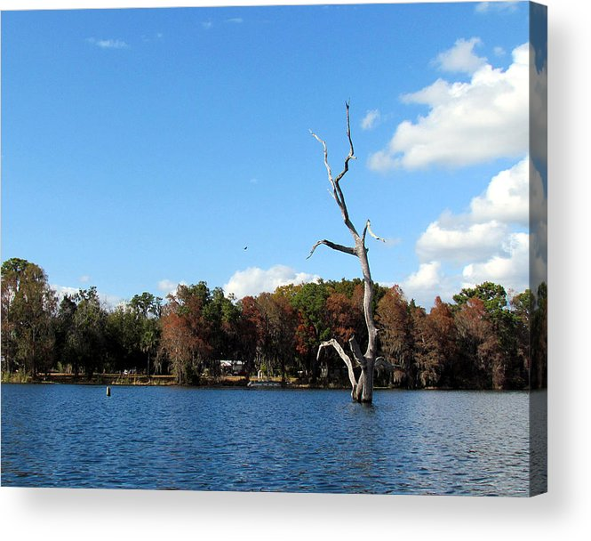 Nature Acrylic Print featuring the photograph Lake Rousseau by Judy Wanamaker