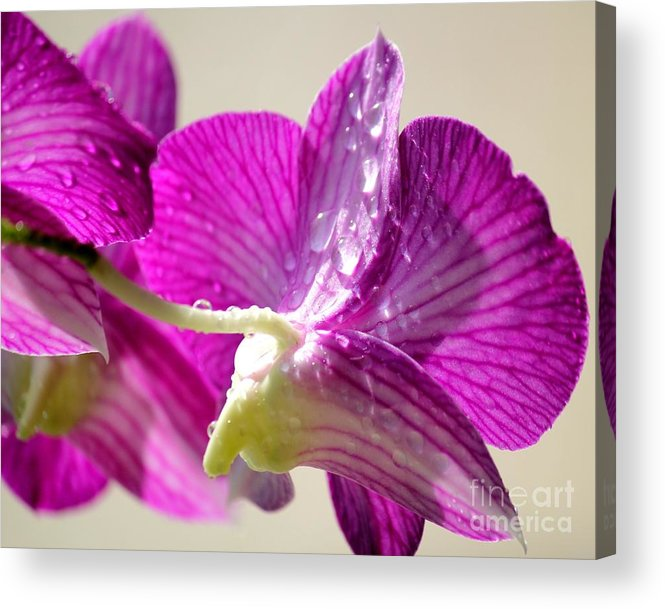Orchids Acrylic Print featuring the photograph Orchids And Raindrops by Theresa Willingham
