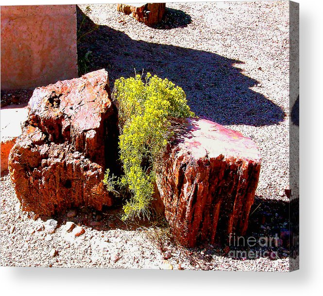 Arizona Acrylic Print featuring the photograph Petrified Tree Stumps In Arizona by Merton Allen