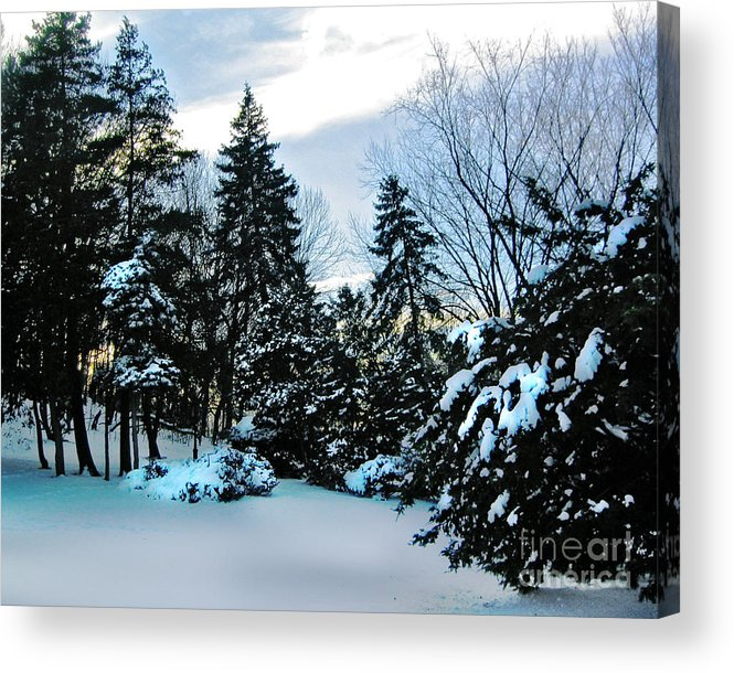 Pine Trees Acrylic Print featuring the photograph Snow Pines by Anne Ferguson
