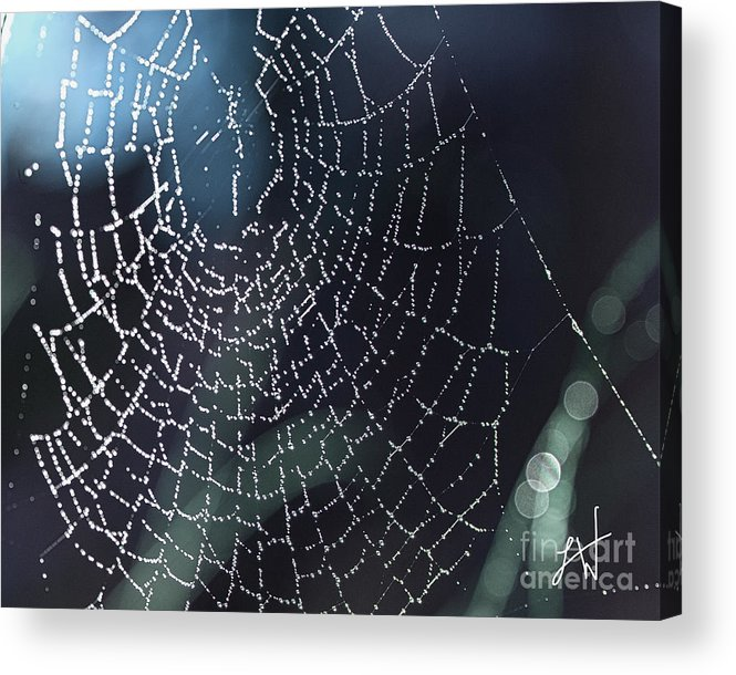 Spiderweb Acrylic Print featuring the photograph Spiderweb Blues by Artist and Photographer Laura Wrede