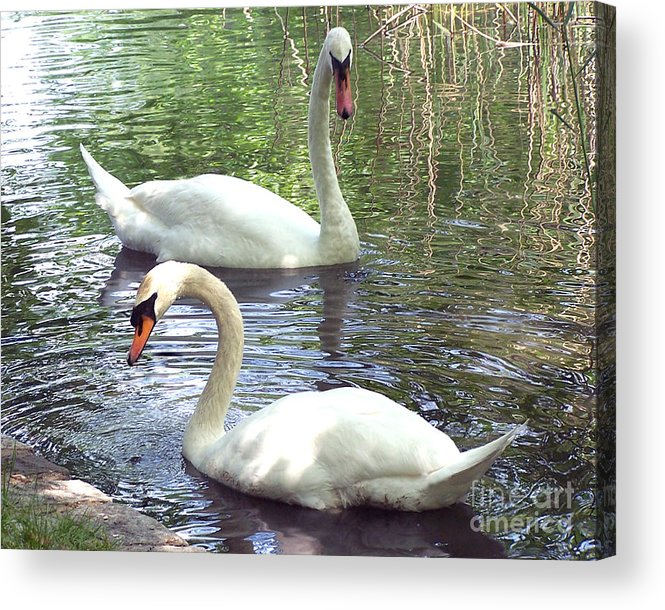 Swans Acrylic Print featuring the photograph Swans by Anne Ferguson