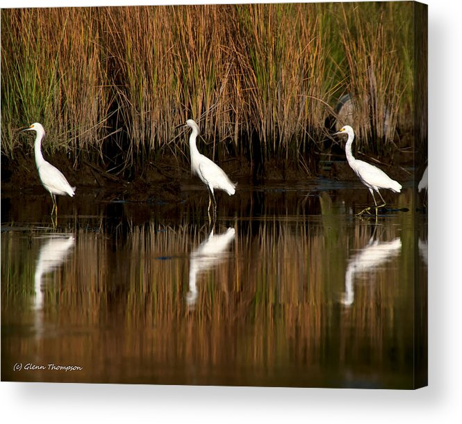 Birds Acrylic Print featuring the photograph Three Musketeers by Glenn Thompson