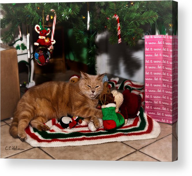 Cat Acrylic Print featuring the photograph Waiting For Santa by Christopher Holmes