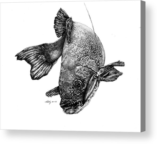 Walleye Acrylic Print featuring the drawing Walleye by Kathleen Kelly Thompson
