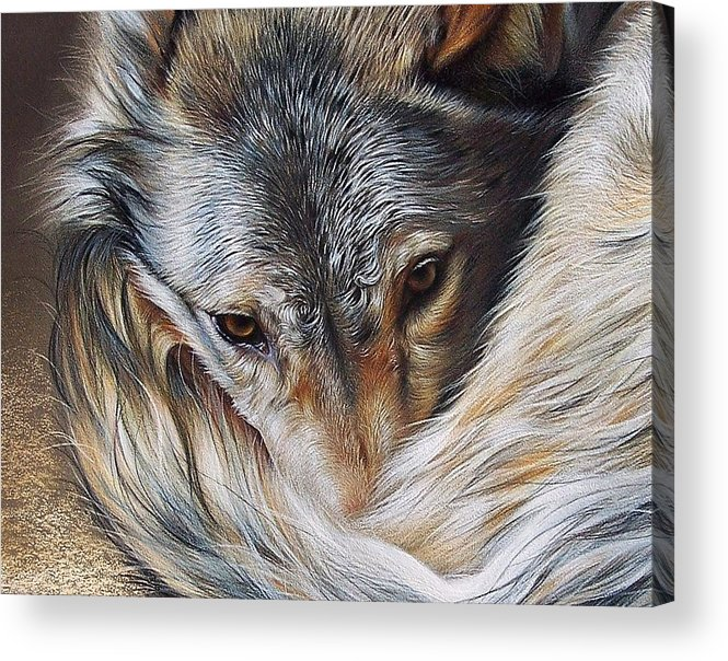 Wolf Acrylic Print featuring the drawing Watchful Rest -close-up Detail by Elena Kolotusha