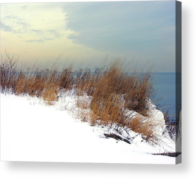 Beach Acrylic Print featuring the photograph Winter Grasses In Snow by Anne Ferguson