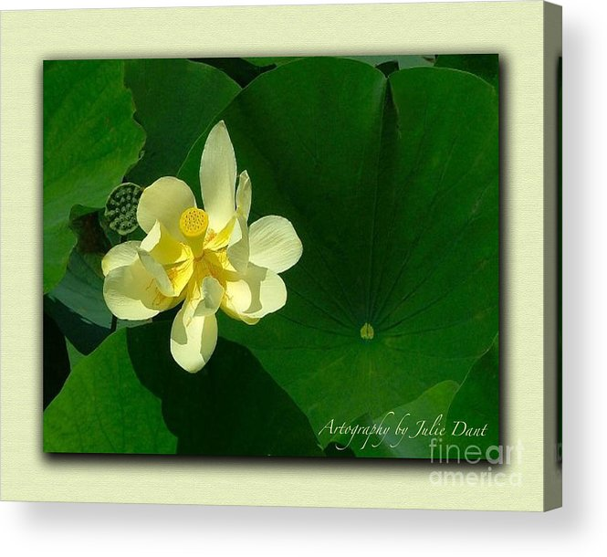 Flowers Acrylic Print featuring the photograph Yellow Lotus Blossom In Mississippi by Julie Dant