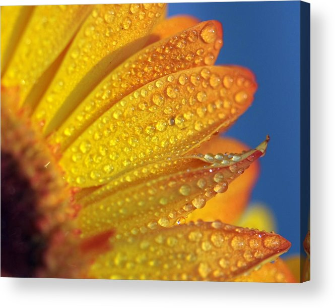 Horizontal Acrylic Print featuring the photograph Yellow Wild Flower by the*Glint