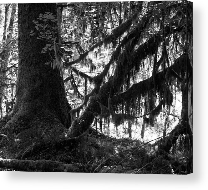 Nature Acrylic Print featuring the photograph Hoh Rain Forest by Sonja Anderson