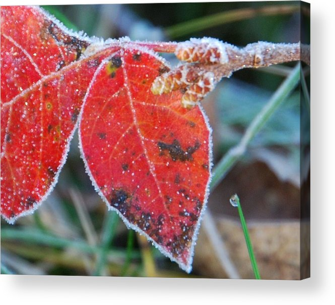 Red Leaves Acrylic Print featuring the photograph Nature by Becky Hollis