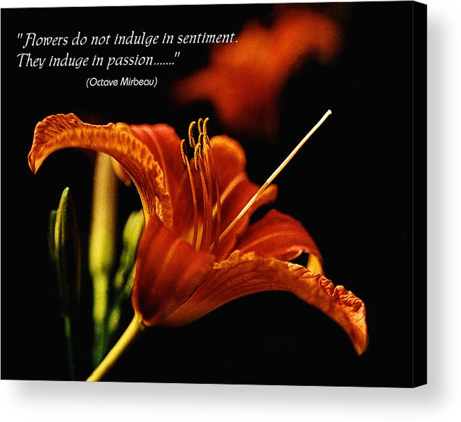 Lily Acrylic Print featuring the photograph Single Tiger Lily Poster by Roger Soule