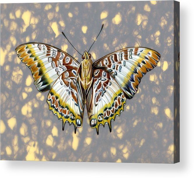 Butterflies Acrylic Print featuring the painting African Butterfly by Mindy Lighthipe