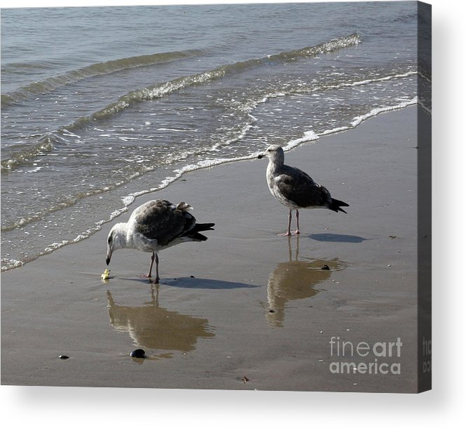 Beach Acrylic Print featuring the photograph Afternoon Snack by Kelly Holm