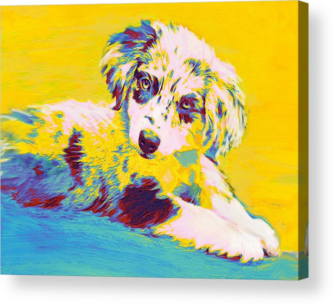 Aussie Acrylic Print featuring the digital art Aussie Puppy-yellow by Jane Schnetlage