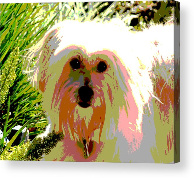 Portrait Acrylic Print featuring the photograph Bonnie In Color by Ellen Lerner ODonnell