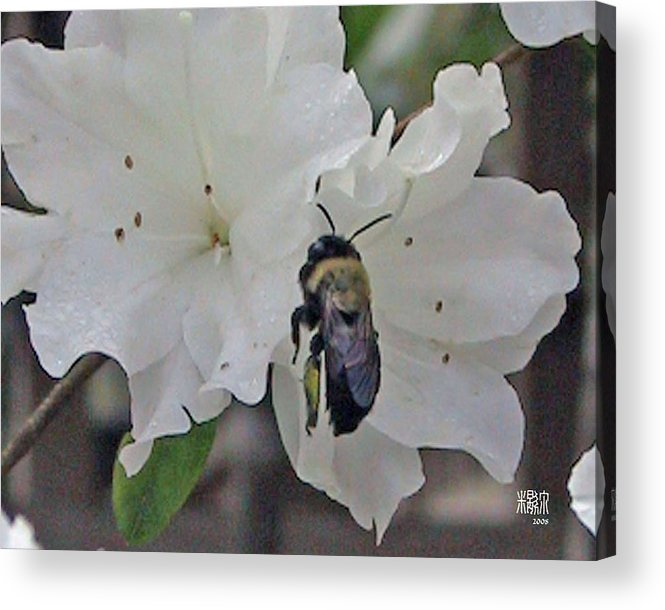 Flowers Acrylic Print featuring the photograph Busy Bee by Michele Caporaso