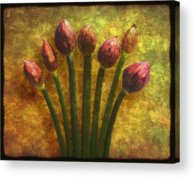 Texture Acrylic Print featuring the digital art Chives Buds by Digital Crafts