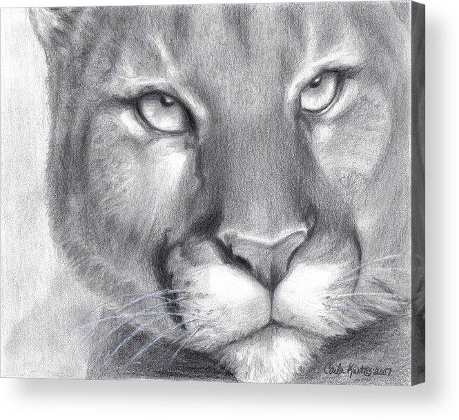 Cougar Acrylic Print featuring the drawing Cougar Spirit by Carla Kurt
